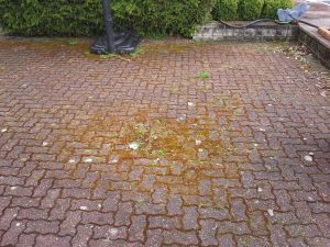 Moss-covered-pavers